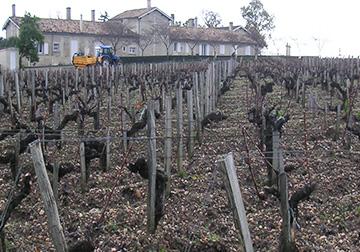 Sociando-Mallet - L'e vignoble, de décembre à mars'hiver
