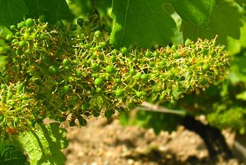 Sociando-Mallet - Le vignoblependant l'été